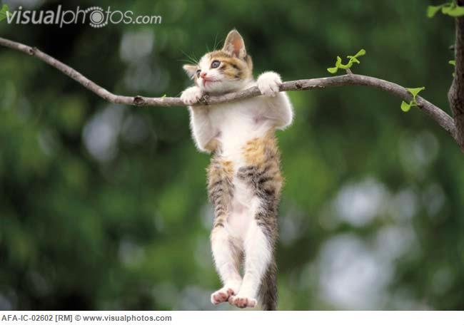 hanging - Animal Stock Photos - Kimballstock
